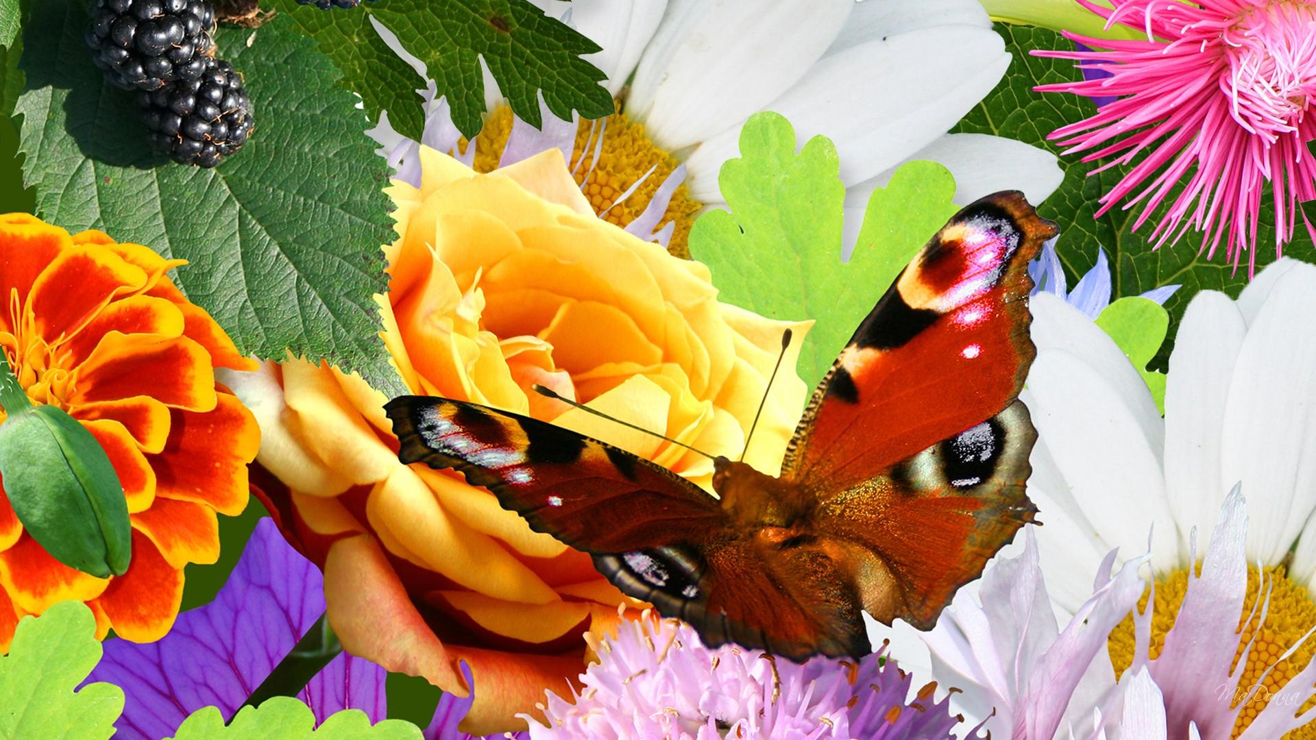 Hoa và Bướm 2k0f