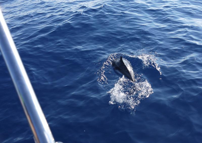 "Dauphins, baleines en Méditéranée et Aquascope ""Black & White"" KwVyvO"
