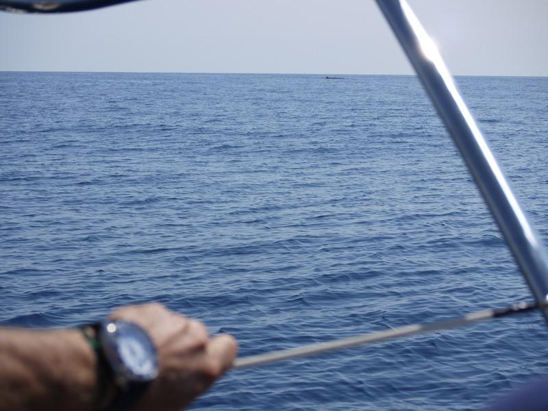 """Dauphins, baleines en Méditéranée et Aquascope """"Black & White"""" BgMaIP"""