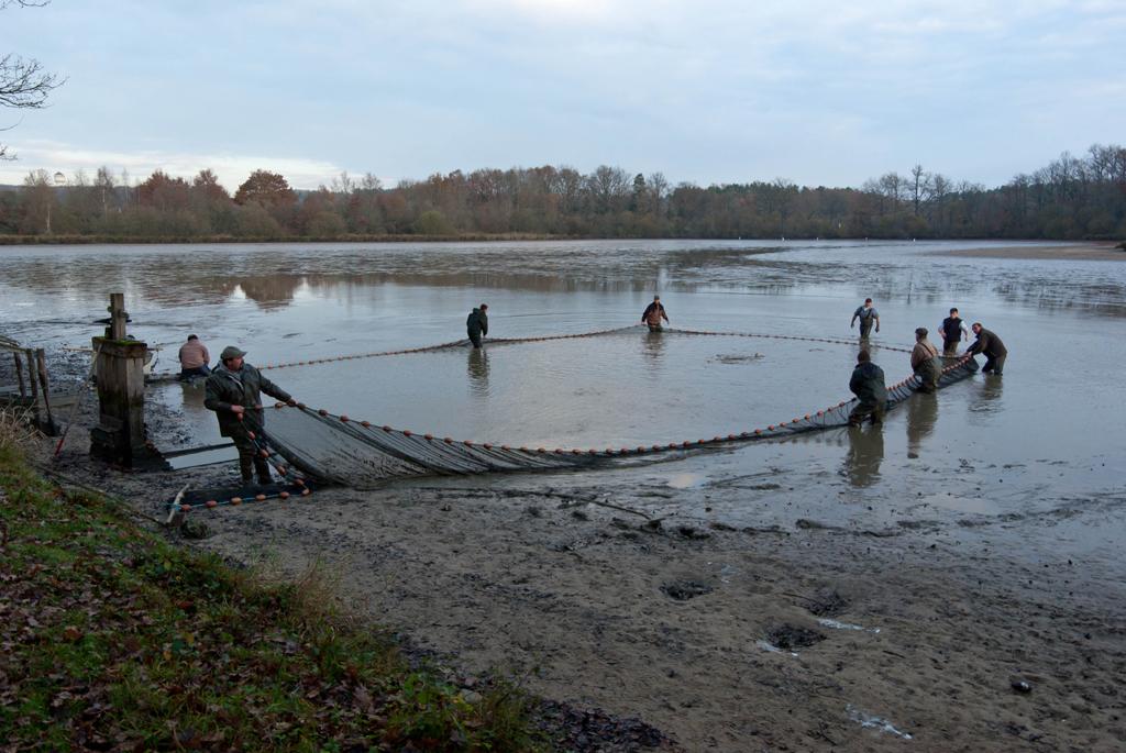 Une pêche d'étang en Sologne BrWUTP