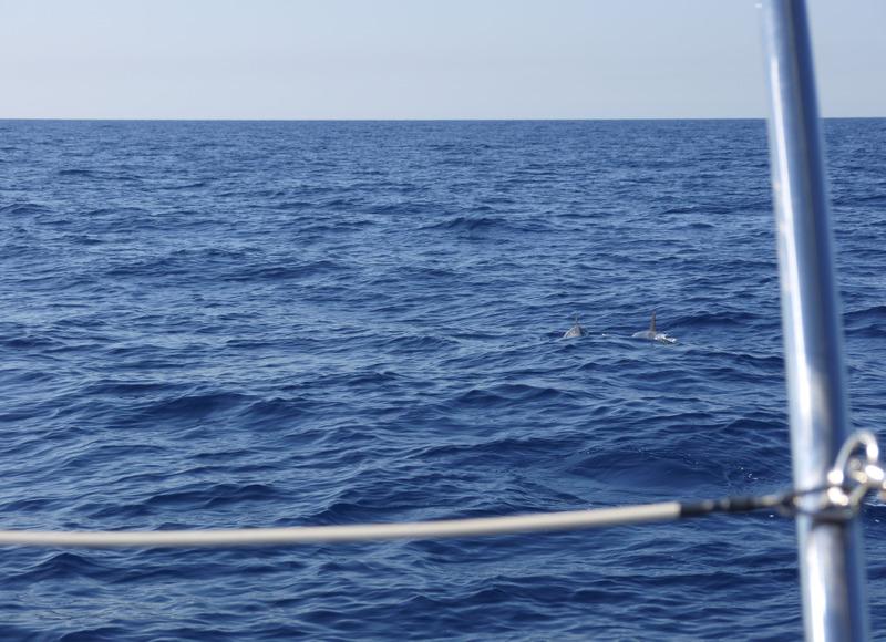 """Dauphins, baleines en Méditéranée et Aquascope """"Black & White"""" MQIXrP"""
