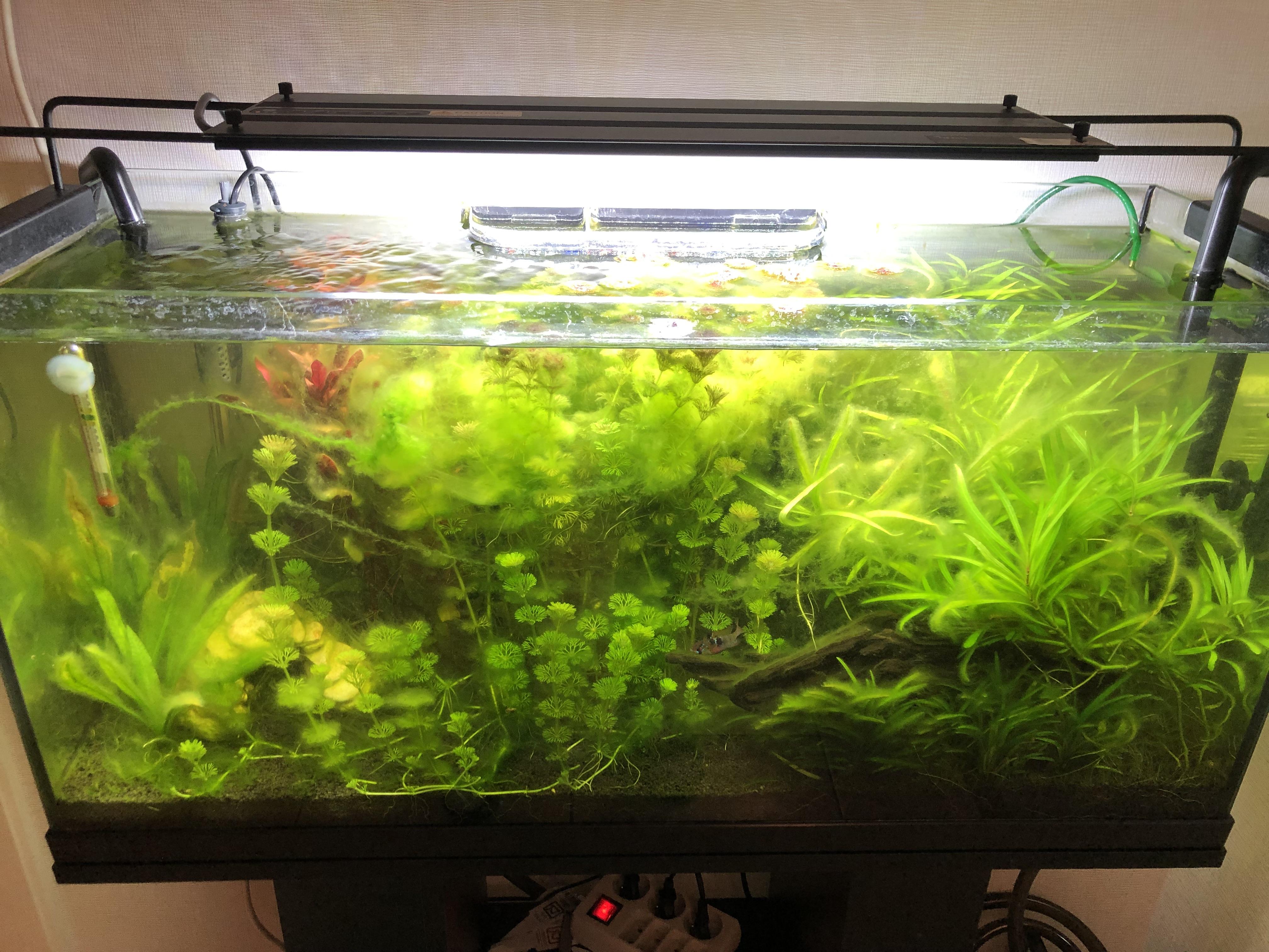 Problème d'algues Qgk1pc