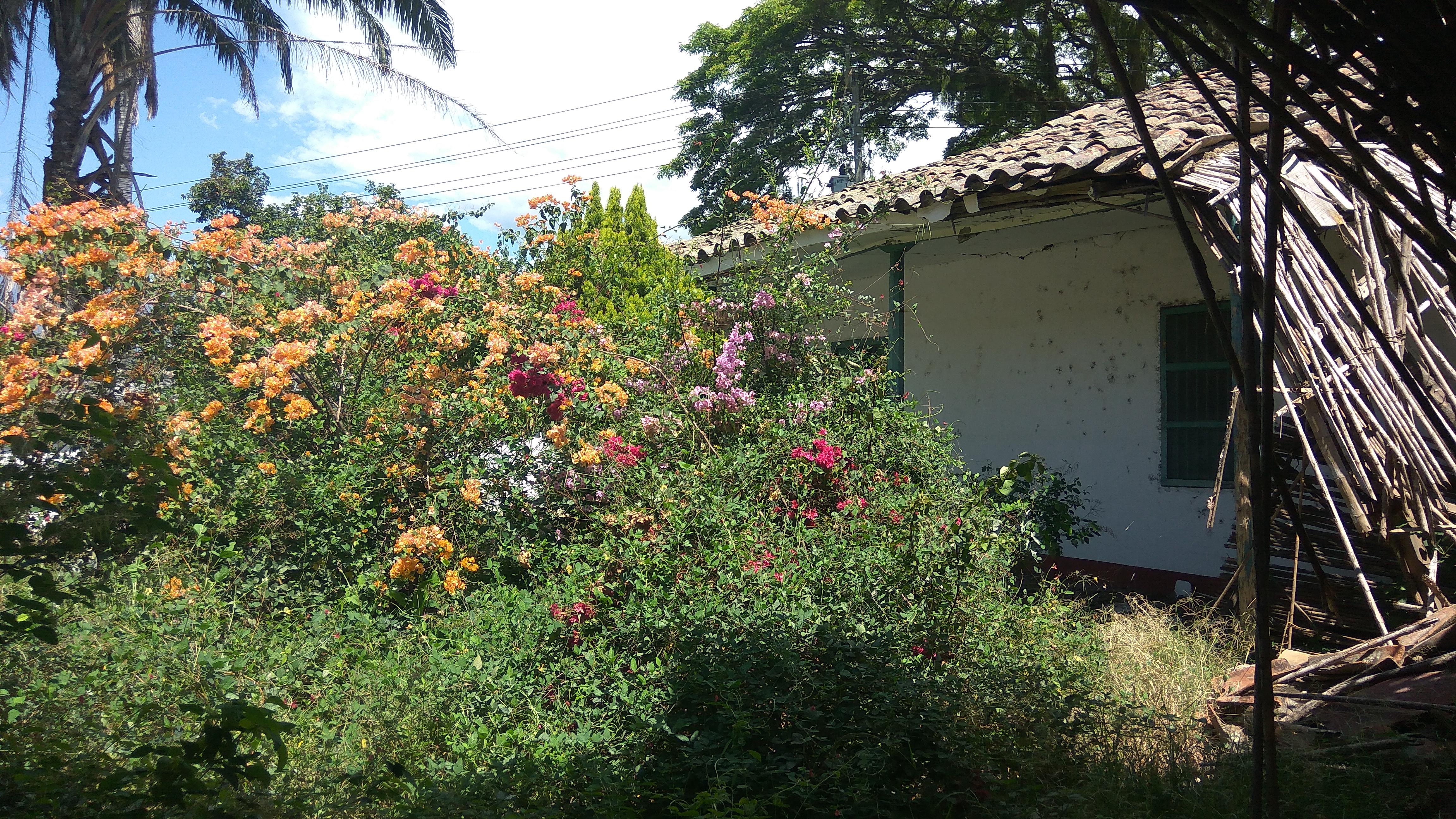 Hacienda Antigua Colombia Intacta  DQ2uz9