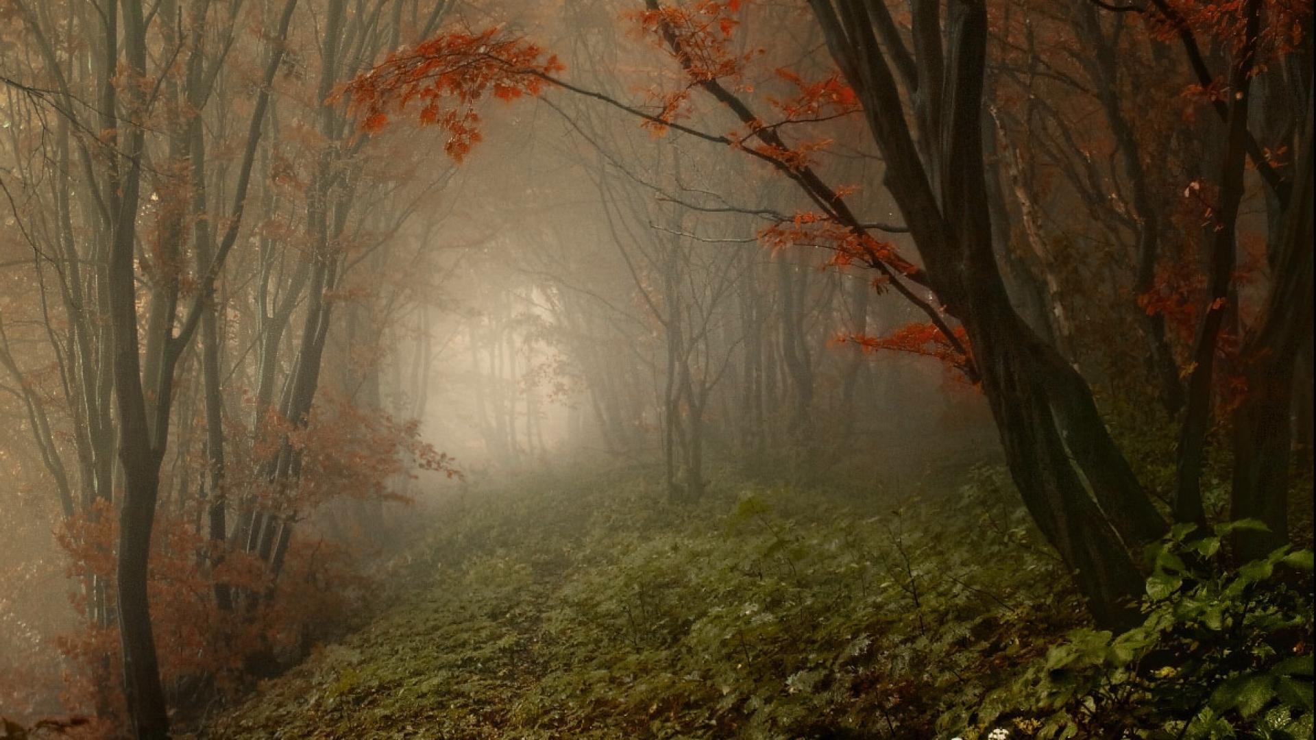 Hình nền mùa thu Autumn22a1
