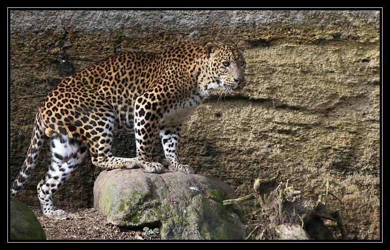 Zoo de Doué la Fontaine Img6501j