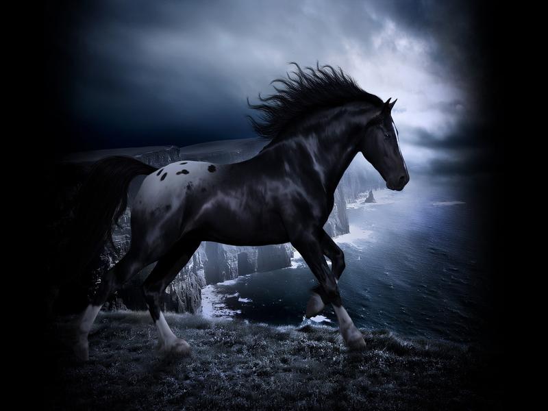 Konji 18927e7030afc364385fdab