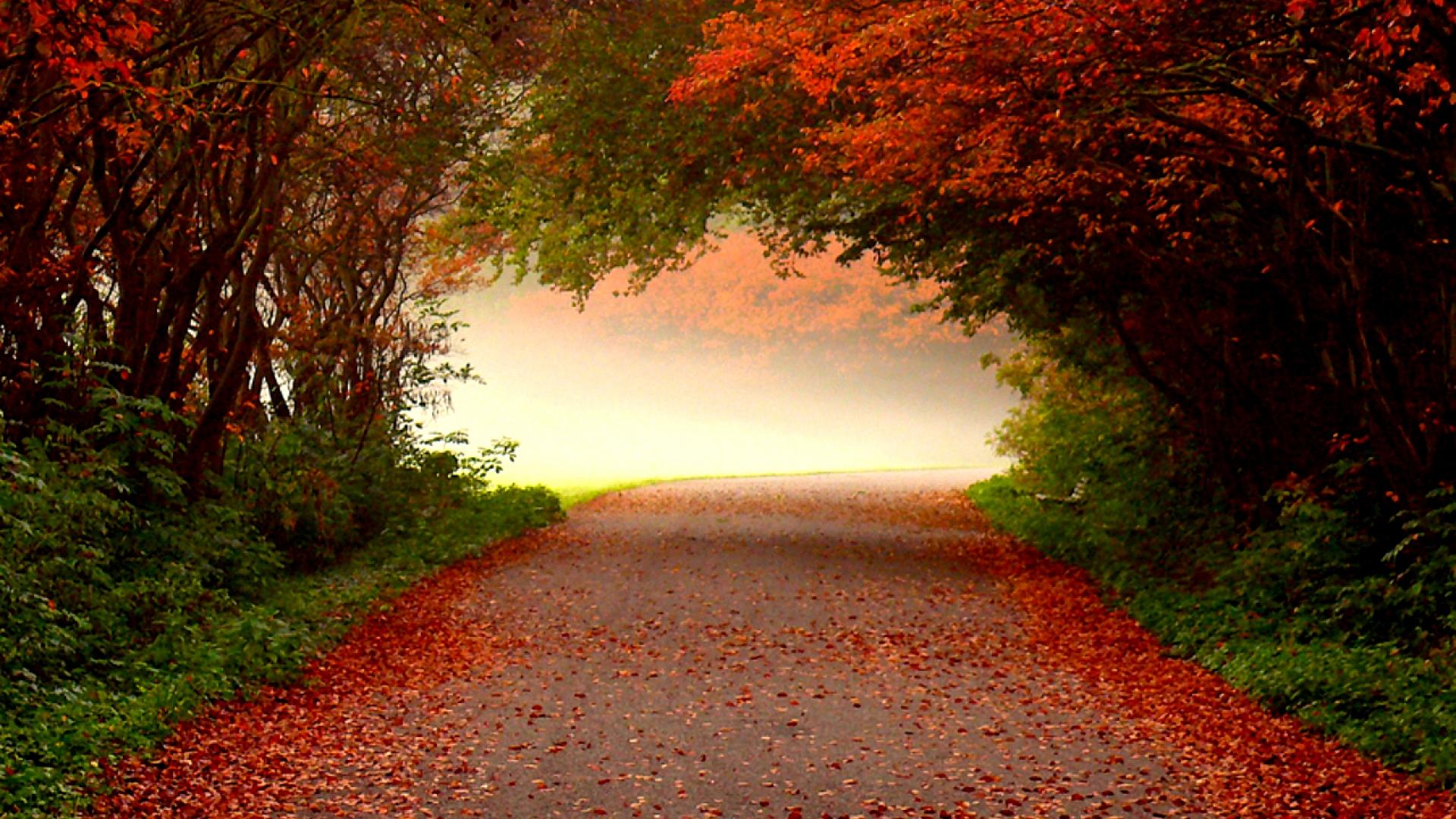 Hình nền mùa thu Autumn100