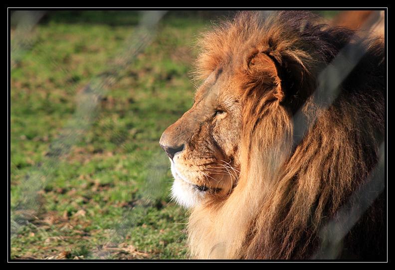 Zoo de Doué la Fontaine Img6766z