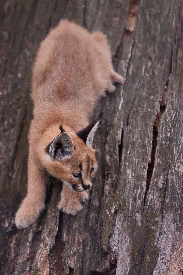 Sortie Animaux au Zoo d'Olmen le 16 août - Les photos - Page 2 Mg61302009081650d