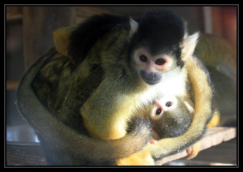 Zoo de Doué la Fontaine Img6783fk