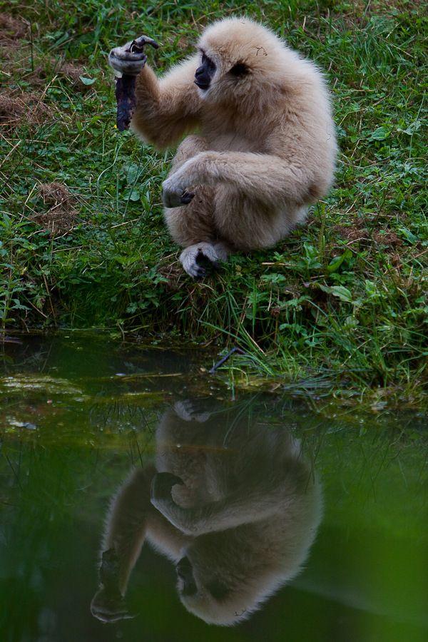 Sortie Animaux au Zoo d'Olmen le 16 août - Les photos - Page 2 Mg61502009081650d