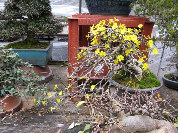 Centro bonsai tenerife en JAPÓN 2009-2010, IIIª Parte 116hd