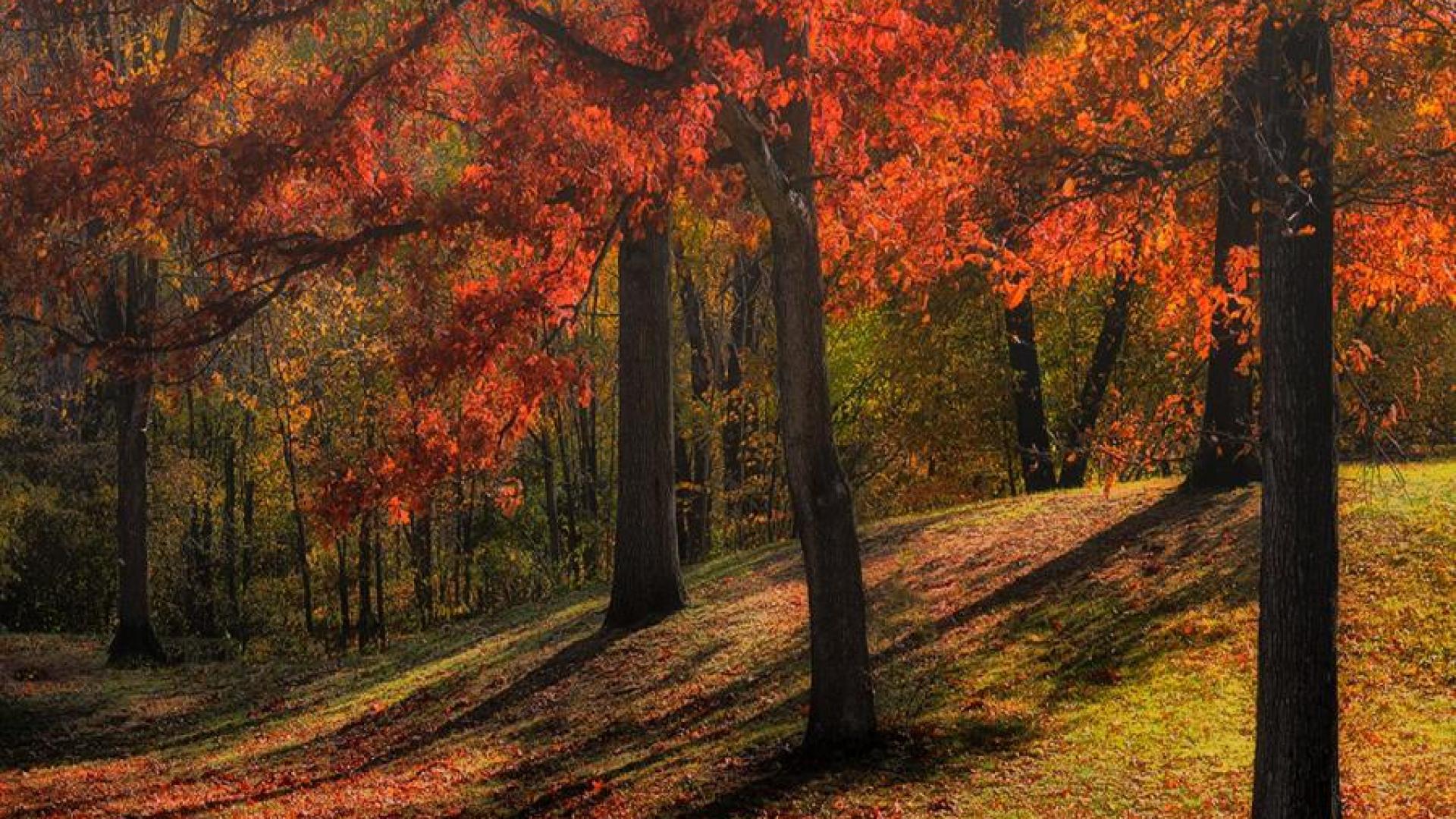 Hình nền mùa thu Autumn12f