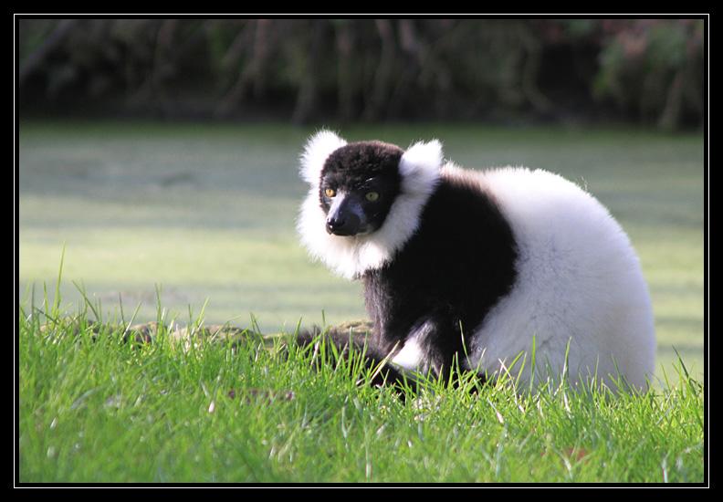 Zoo de Doué la Fontaine Img6688q