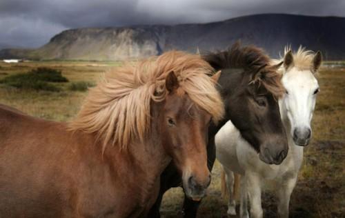 لمحبيه الخيول Horses18