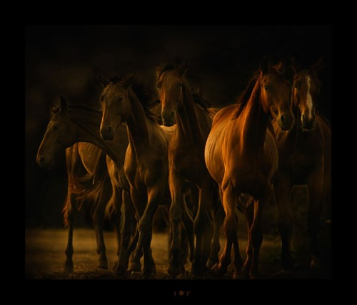 لمحبيه الخيول Horses16