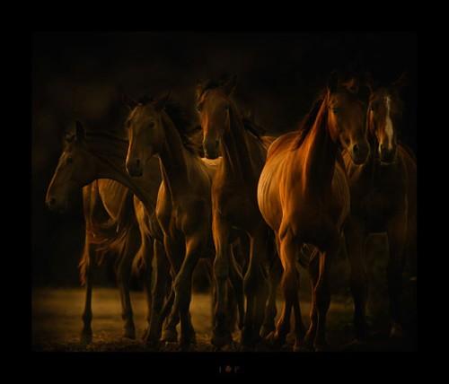 لمحبيه الخيول Horses19