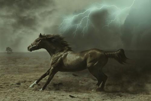 لمحبيه الخيول Horses3
