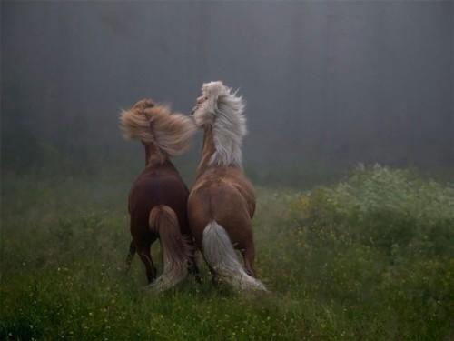 لمحبيه الخيول Horses5