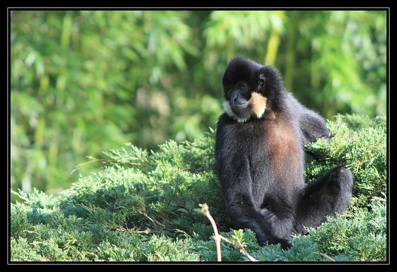 Zoo de Doué la Fontaine Img6696o
