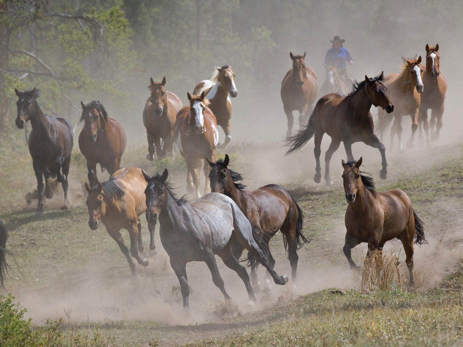 Hình nền ngựa Horses2x