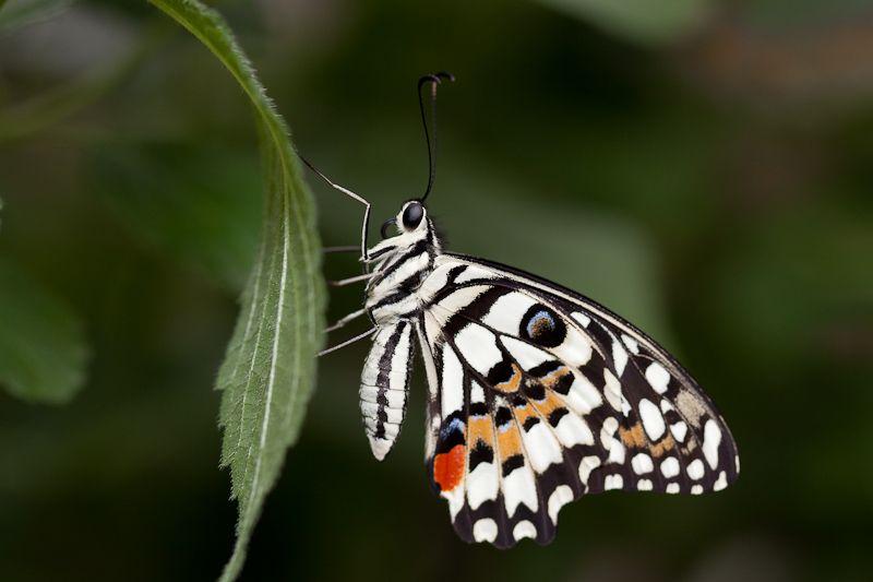 Sortie photo aux jardins des Papillons à Grevenmacher (L) 04 AVRIL 2009 - Les photos - Page 2 Mg15092009040450d