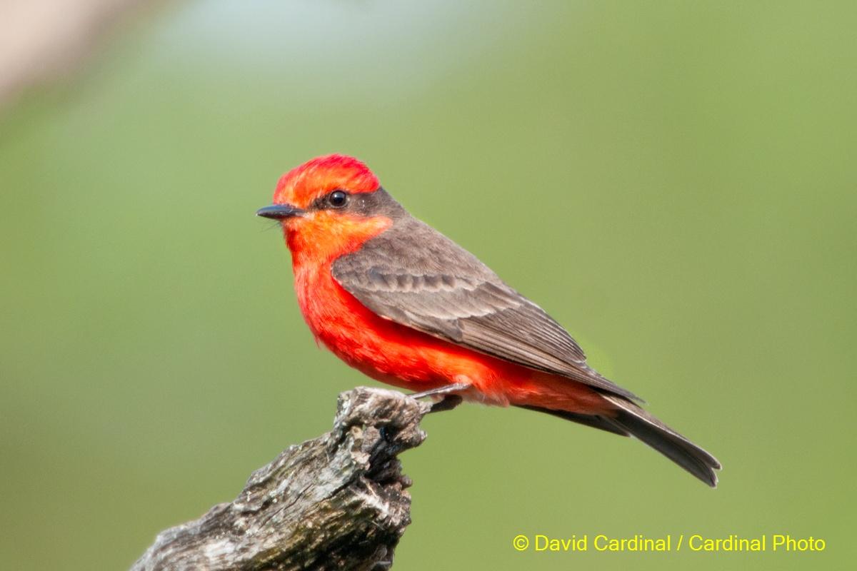Hình nền Chim 10safaribird
