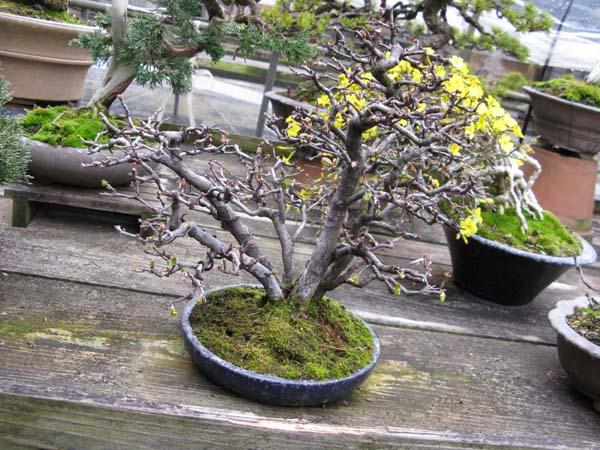 Centro bonsai tenerife en JAPÓN 2009-2010, IIIª Parte 104oa