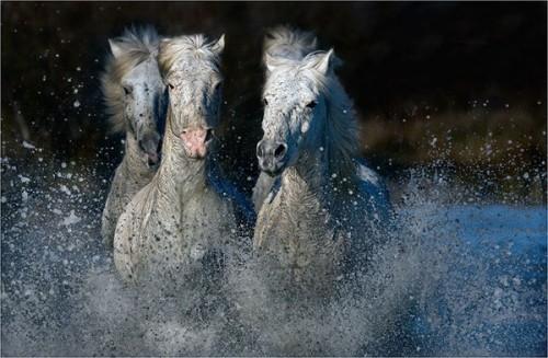 لمحبيه الخيول Horses14