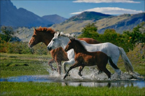 لمحبيه الخيول Horses4