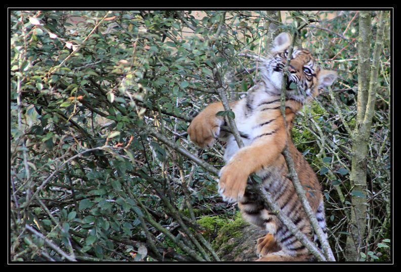 Zoo de Doué la Fontaine Img6727e