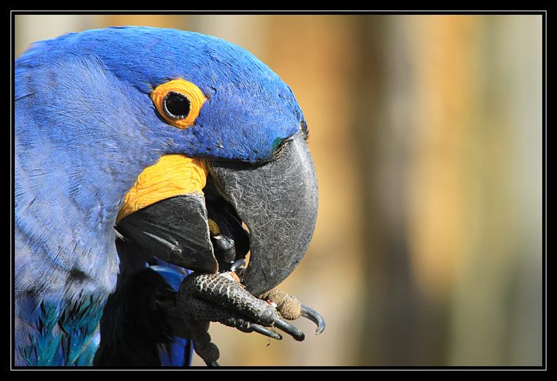 Zoo de Doué la Fontaine Img6580t