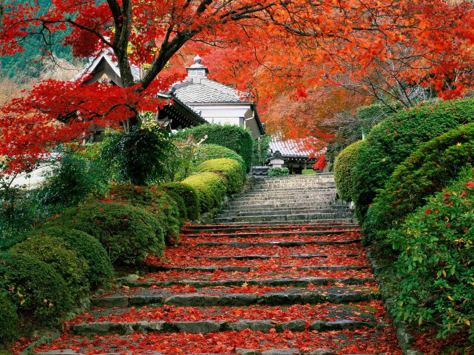 Japan Nature Wallpapers Gardenstaircasekyotojap