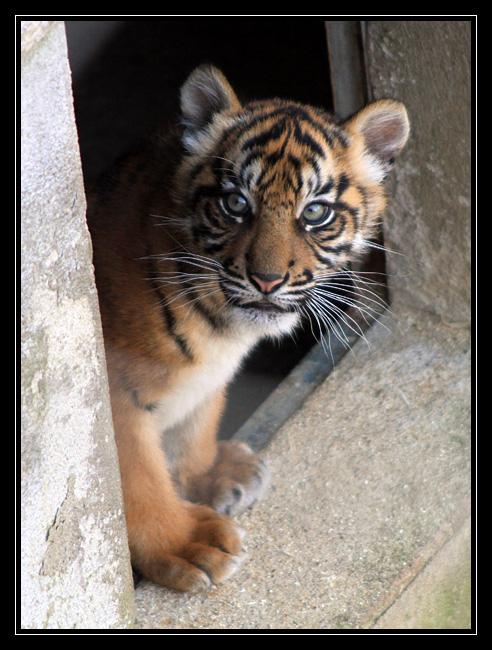 Zoo de Doué la Fontaine Img6711h