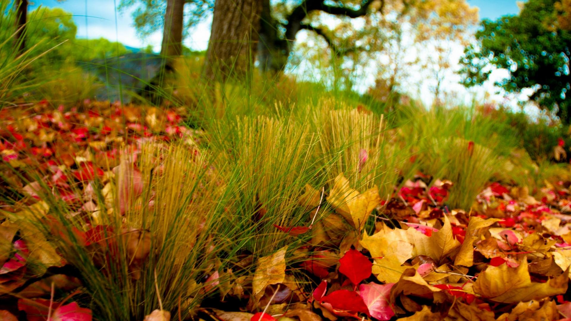 Hình nền mùa thu Autumn51