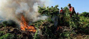 Güney Doğu'da uyuşturucu tacirlerine büyük darbe - 24 Temmuz 2013   3az3