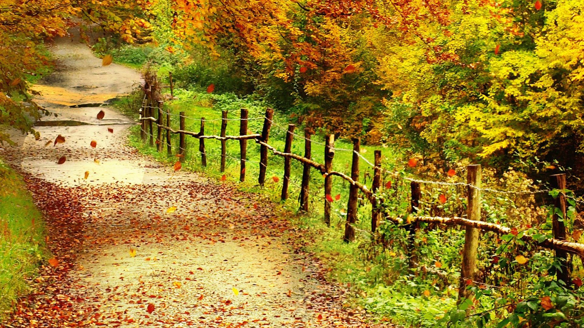 Hình nền mùa thu Autumn93