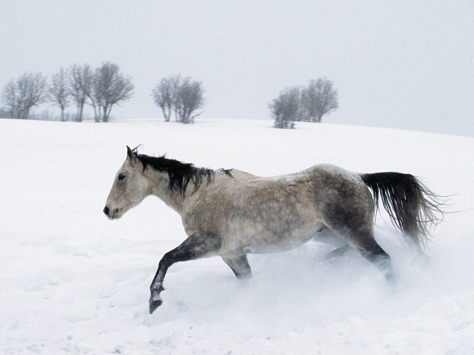 Hình nền ngựa Horses4
