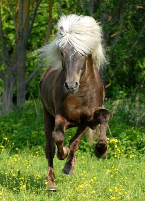 لمحبيه الخيول Horses15