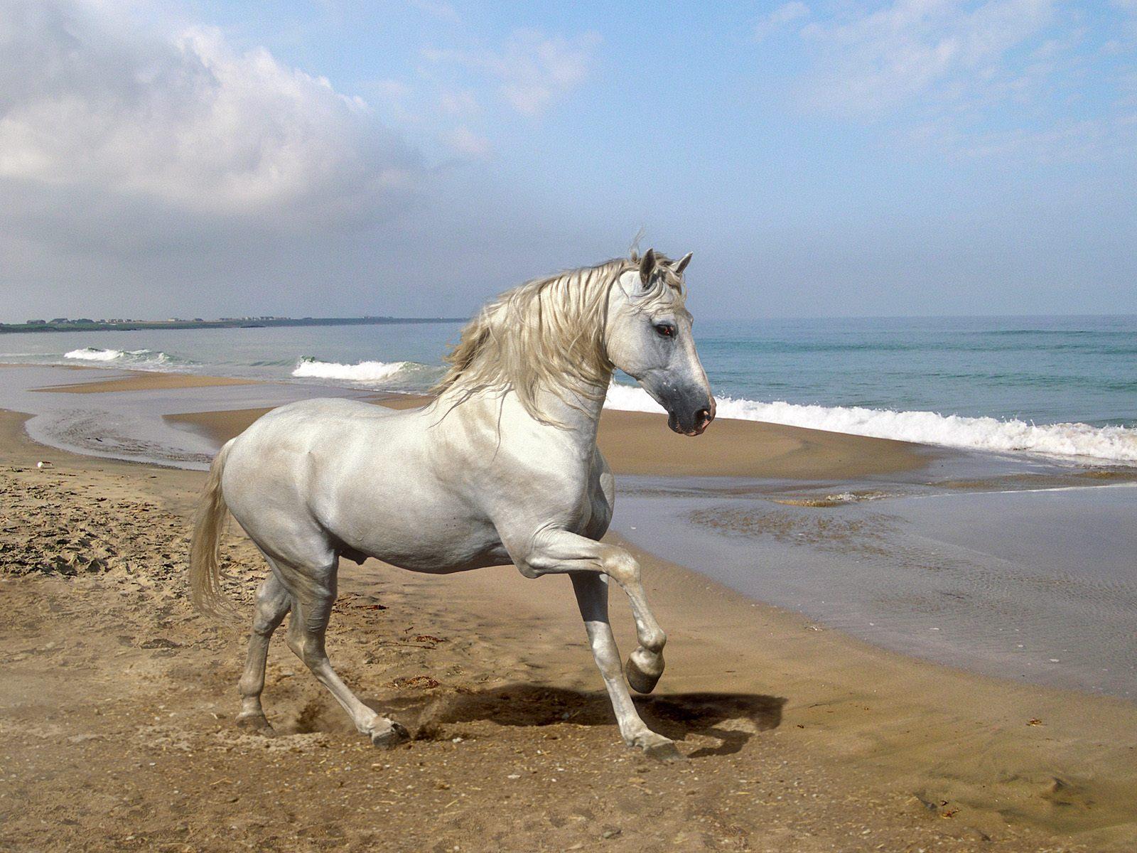 Hình nền ngựa Horses3