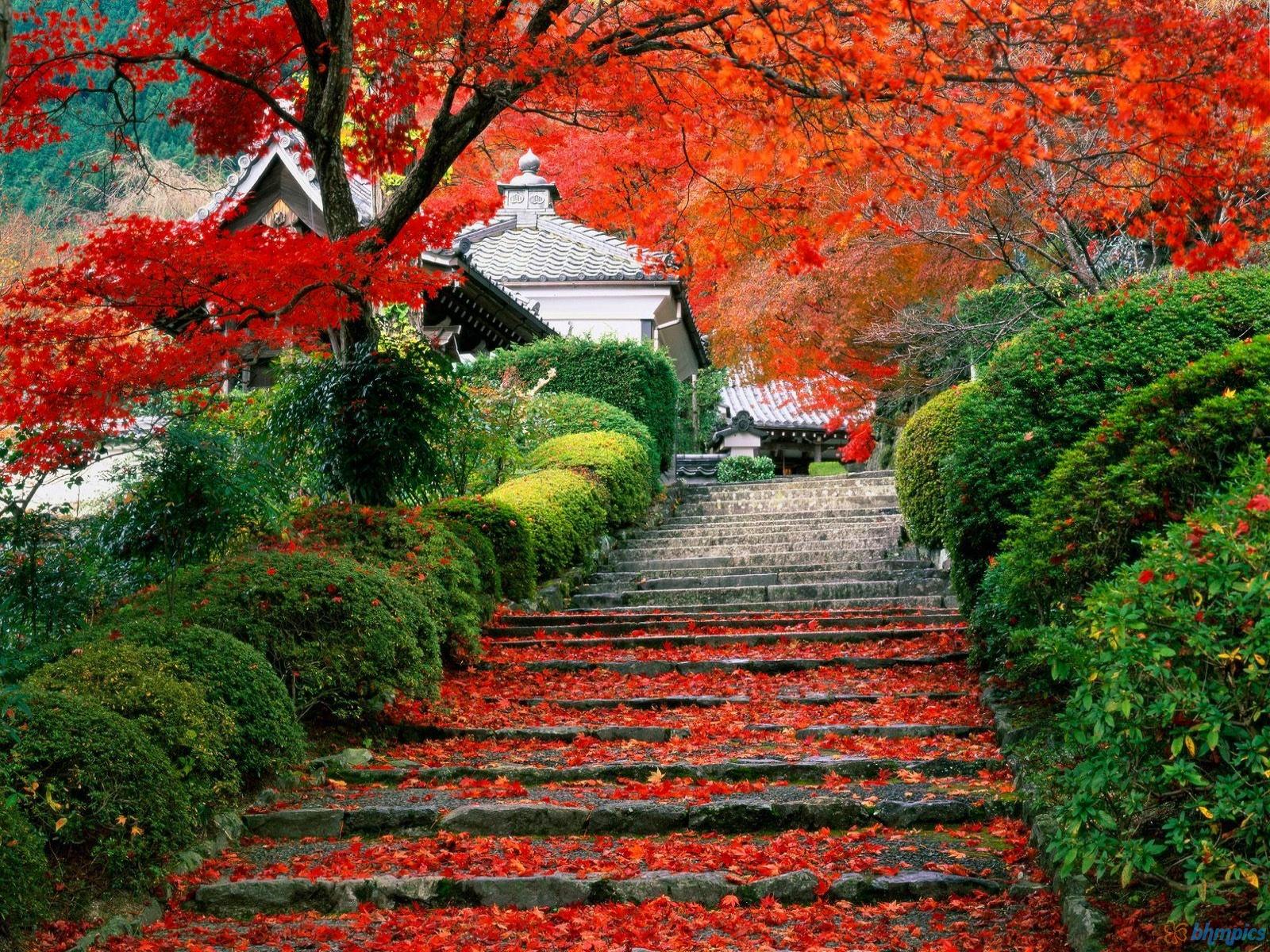 Hình nền mùa thu Autumngardenstaircase16