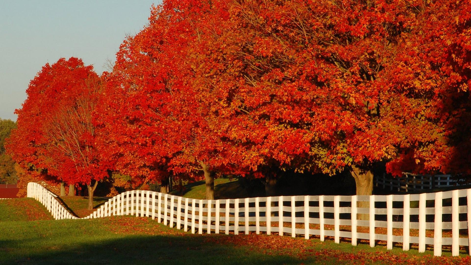 Hình nền mùa thu Autumn78