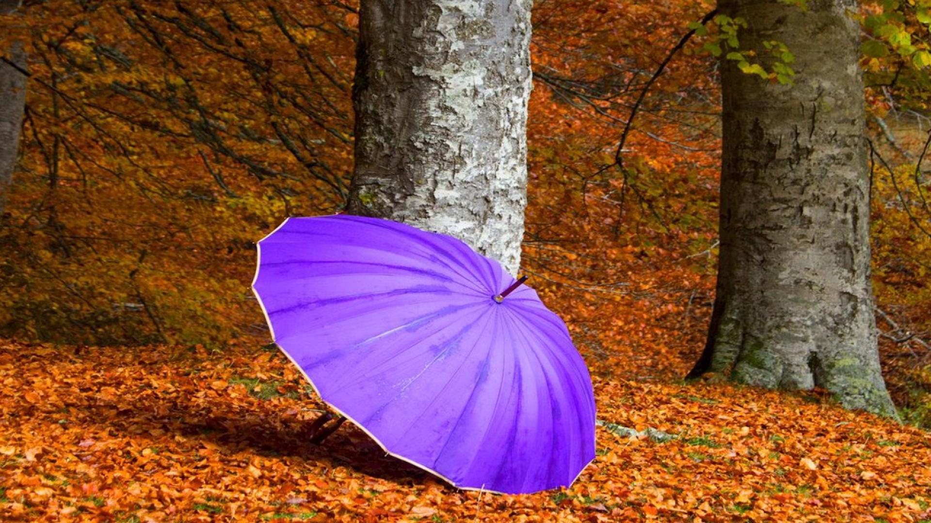 Hình nền mùa thu Autumn57