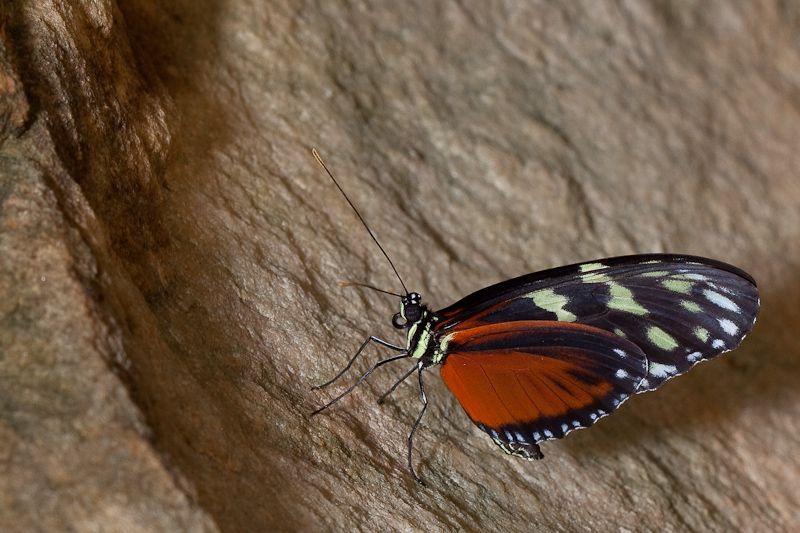 Sortie photo aux jardins des Papillons à Grevenmacher (L) 04 AVRIL 2009 - Les photos - Page 2 Mg15472009040450d