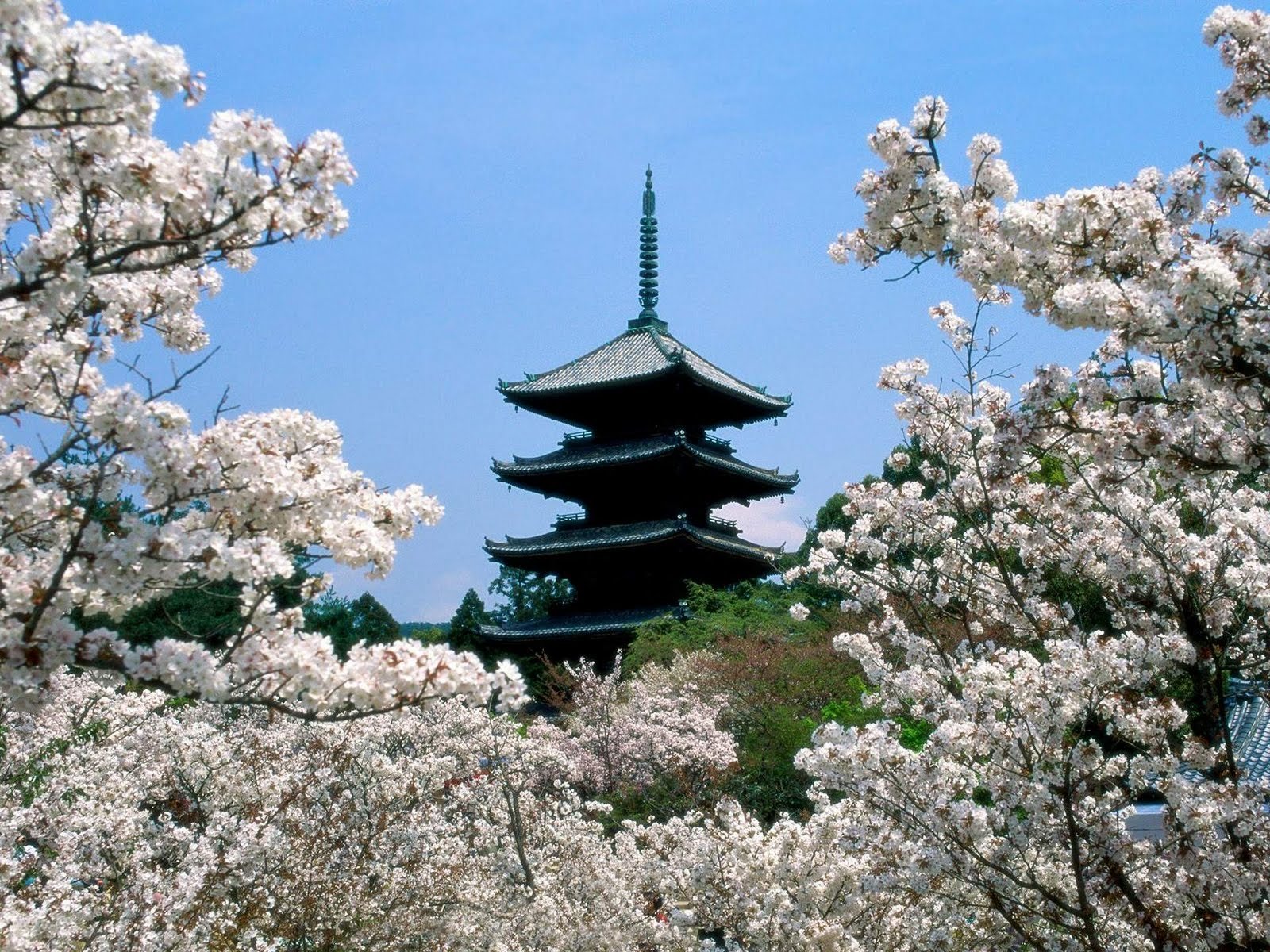 Japan Nature Wallpapers Cherryblossomsninnajiter