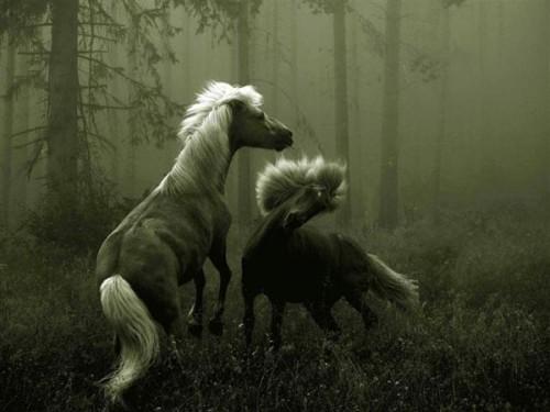 لمحبيه الخيول Horses7