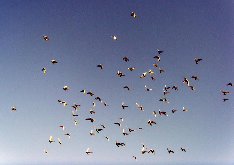 VIDEO : Un OVNI filmé au Chili laisse les experts perplexes - Page 2 Birds1yu