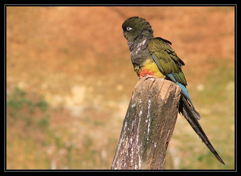 Zoo de Doué la Fontaine Img6623h