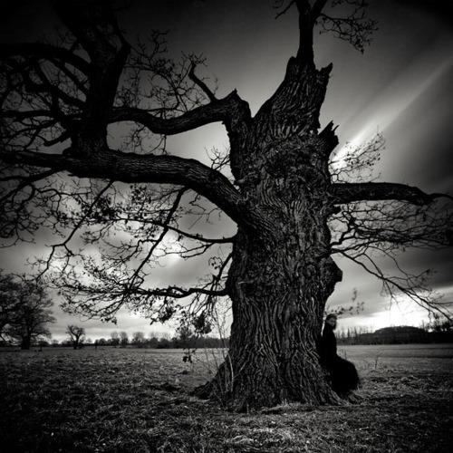 Bilo jednom jedno drvo Dttc48t8v1