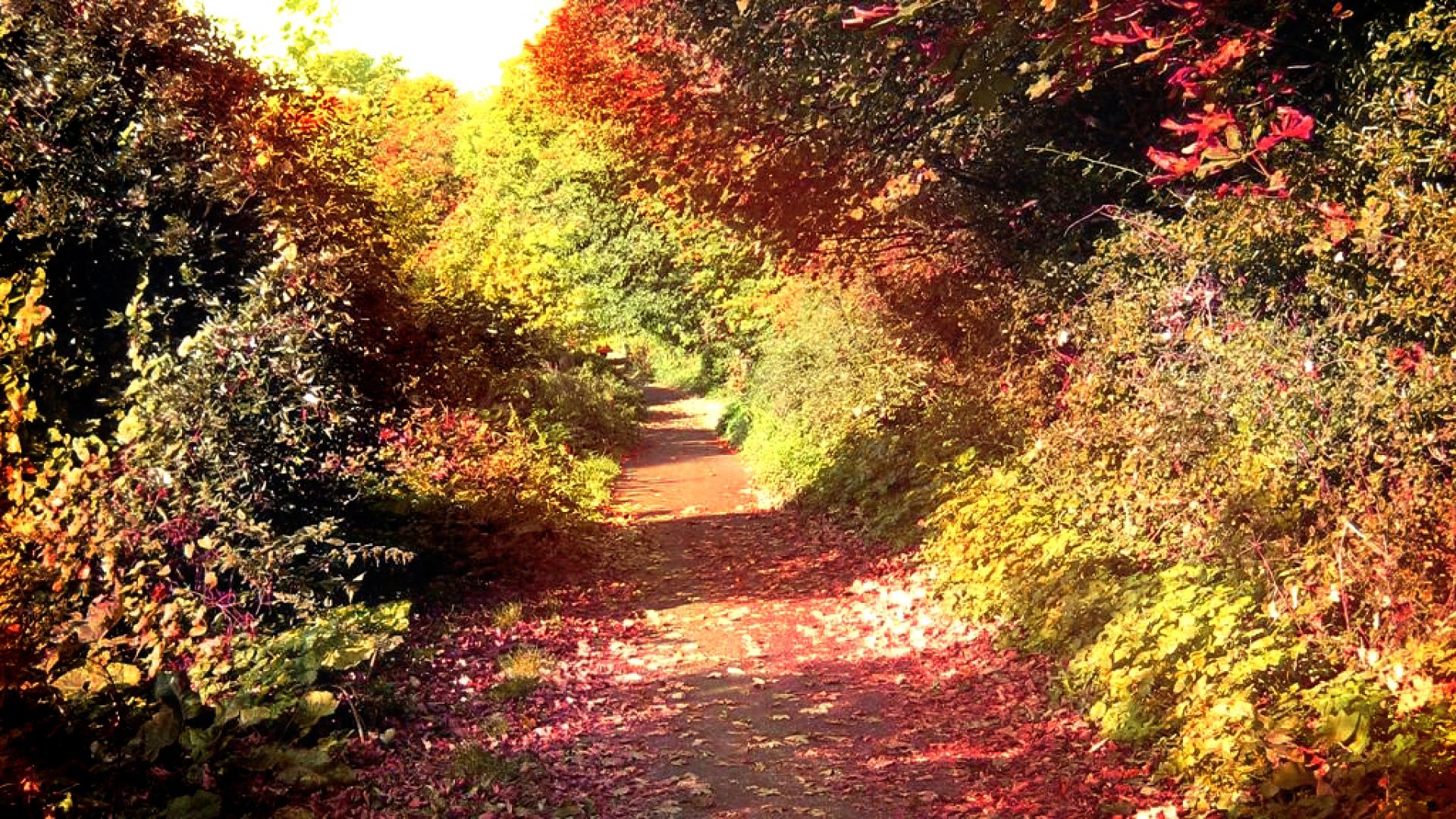 Hình nền mùa thu Autumn17